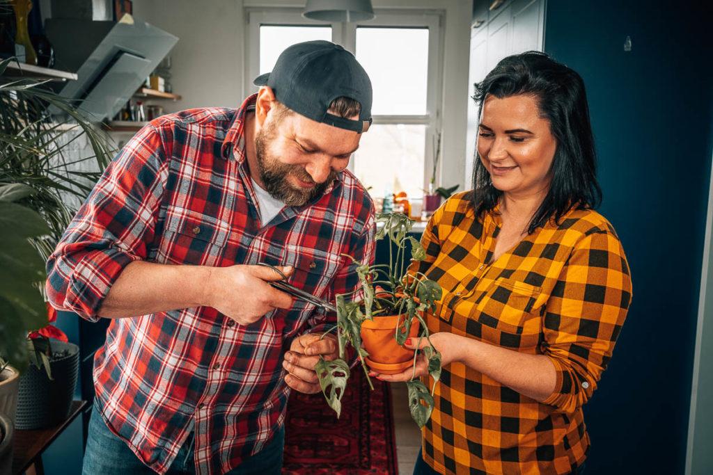 jak dbać o rośliny