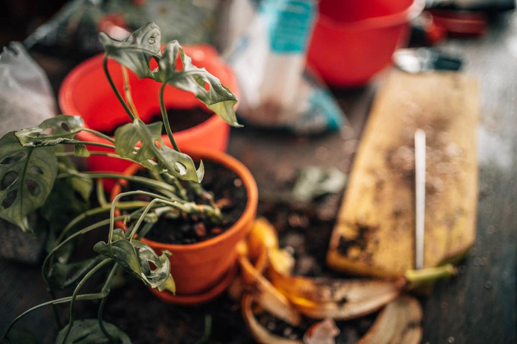 rośliny po zimie