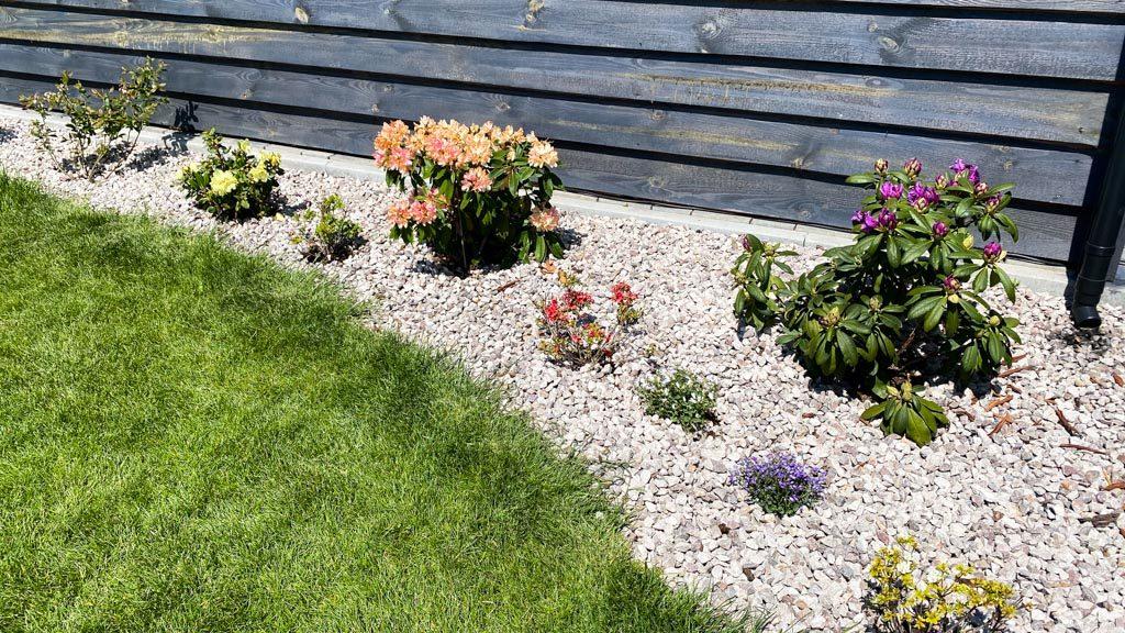 jakie byliny zasadzić w ogrodzie